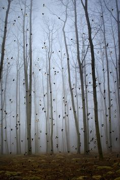 Stunning photo taken January 2013 by Oskar Zapirain. It has a lovely sense of rhythm in the repetition of vertical lines from the trees, interrupted by scattered birds flying across.