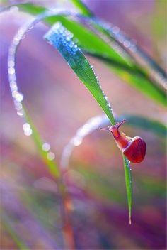 Snail baby ¤♥¤ Raindrops