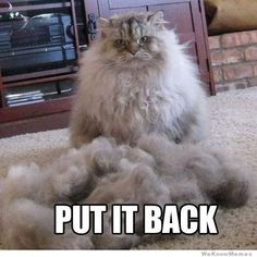 Funny pictures about Put it back right meow. Oh, and cool pics about Put it back right meow. Also, Put it back right meow. Funny Animal Pictures, Funny Animals, Cute Animals, Funniest Animals, Duck Pictures, Daily Pictures, Animal Pics, Crazy Cat Lady, Crazy Cats