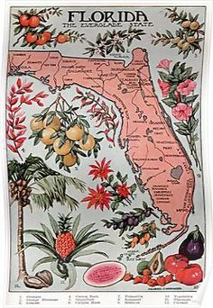 1912 Illustrated map of Florida. depicting the hot points of Florida with pictures added. A beautiful illustration that has been lovingly reproduced. Old Florida, Vintage Florida, Florida Style, Florida Girl, Florida Home, Florida Maps, Florida Travel, Florida Design, Vintage Travel Posters