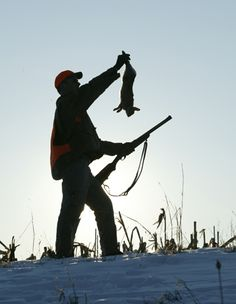Tips for Hunting Rabbits Without a Dog
