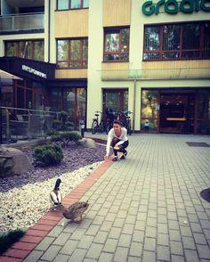 Kai aplanko draugai  #antys #ducks Our Life, Ducks, Kai, Sidewalk, Walkways, Pavement, Curb Appeal
