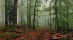 beautiful forest fog wallpaper download high resolution