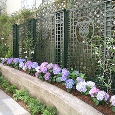 hydrangeas!!!!!  Traditional Landscape Concrete Driveway Design, Pictures, Remodel, Decor and Ideas - page 2