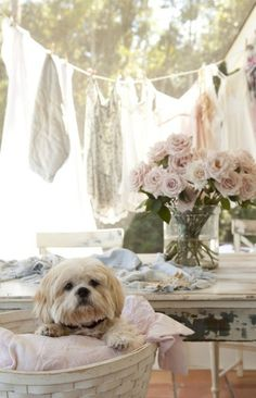 SHABBY-PUP . . . Love everything, especially the dog!