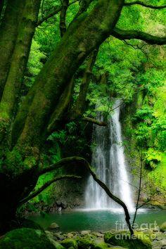 ✯ O Salto do Prego Cachoeira, perto da aldeia de Faial da Terra - Ilha de São Miguel, Arquipélago dos Açores, Portugal