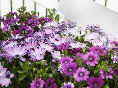 Slik lykkes du med orkidé   Stelletips fra Mester Grønn Planting, Garden, Flowers, Pink, Plants, Garten, Lawn And Garden, Gardens, Gardening