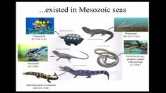 Global Distribution Achieved by Halisaurine Mosasaurs Explained by a New Discovery from Japan University Of Cincinnati, Discovery, Japan, Japanese