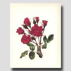 Rose Decor Red Flower Wall Art 1960s от ParagonVintagePrints