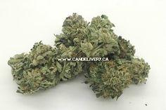 MK ULTRA cannabis