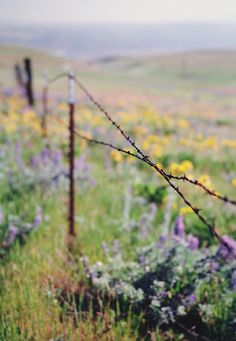 The barbed wire fence to keep the cows out of the alfalfa field. Country Charm, Country Life, Country Girls, Country Living, Country Fences, Country Roads, Rustic Fence, Old Fences, Ranch Life
