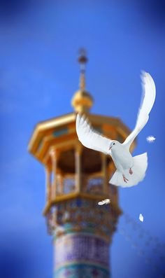 The Holy Shrine of Imam Reza, Mashhad - Iran by Mojtaba Niknam #photo #art #bird