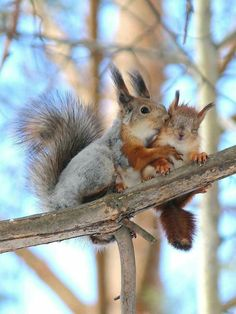 Mommy squirrel kissing her bebe!!
