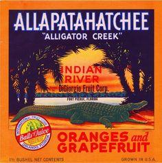 Fort Pierce Florida Allapatchatchee Alligator Creek Orange Crate Label Art Print - Florida Citrus Fruit Crate Label Art Prints - Fruit and Vegetable Crate Label Art Prints Vintage Labels, Vintage Ads, Vintage Posters, Art Posters, Travel Posters, Vintage Travel, Vintage Signs, Vintage Prints, Vintage Photos