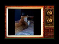 Funny Cats Compilation 2014,funny cats video 2014,funny fails cats,funny crazy cats,funny top cats  http://www.youtube.com/watch?v=lUwSJPrP3gA