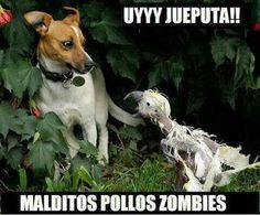 http://imagenes-chistosas-y-graciosas.blogspot.com/2013/10/ataque-de-pollos-zombies.html