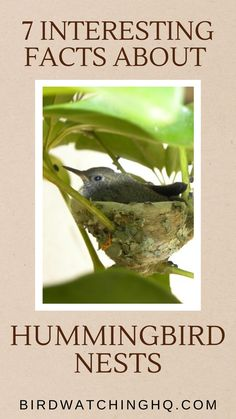 Hummingbird Nests, Hummingbird Plants, Hummingbird Meaning, How To Attract Birds, How To Attract Hummingbirds, Humming Bird Feeders, Humming Birds, Garden Animals, Bird Food