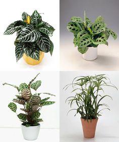 1000 images about plantas de interior on pinterest - Plantas d interior ...