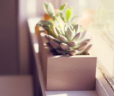 Succulent Planter Box ($31.00) - Svpply