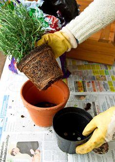 Garden Plants, Planter Pots, Garden Ideas, Gardening, Grasses, Lawn And Garden, Landscaping Ideas, Backyard Ideas, Horticulture