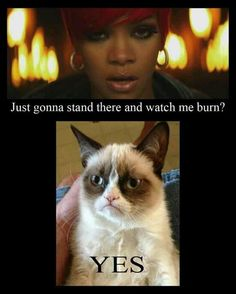 Related Funny Pictures:WTF of the dayI don't need anger managementNext to your crashYou fond the problem sirA little closer. Grumpy Cat Quotes, Funny Grumpy Cat Memes, Cute Cat Memes, Grumpy Cats, 9gag Funny, Really Funny Memes, Funny Jokes, Funny Stuff, Cat Stuff