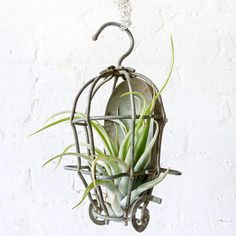 Industrial Air Plant Garden Cage Hanger by EarthSeaWarrior