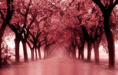 red park by juan alfonso on 500px