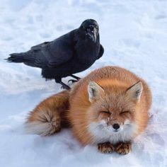 Beautiful Creatures, Animals Beautiful, Cute Animals, Fox Spirit, Spirit Animal, Fox Species, Yennefer Of Vengerberg, Little Fox, Best Bud