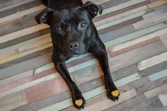 Our dog mojo with two golden paste ice cubes on her paws