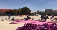 Así se construye la gigantesca alfombra de flores en el Monumento a la Revolución