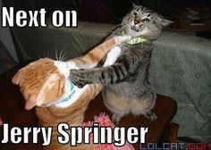 next on Jerry Springer...