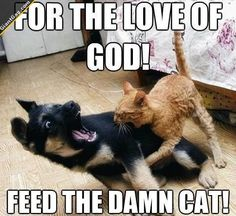 For The Love Of God Feed The Damn Cat | Click the link to view full image and description : )
