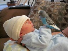 """Alicia E. writes: """"Hi! I love this website, thanks for all the adorableness. Here is a picture of my budgie Tukey meeting my baby Sebastian when we first brought him home from the hospital."""""""