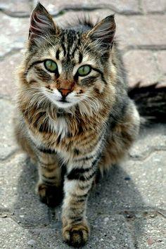 Beautiful cat!!!