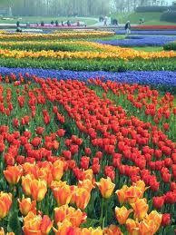 Floriada, the largest floral event in the world that occurs every 10 years in Holland...
