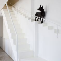 There's a special staircase for dogs at this renovated house in Ho Chi Minh City by architecture studio 07Beach.
