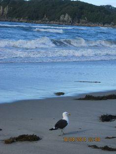 Tauranga Beach #NewZealand #Memories