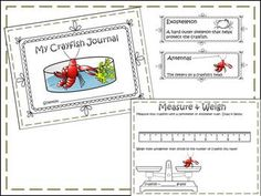 our students will enjoy being a scientist and learning more about the structures of life!! Students will use the scientific method and their crayfish journal to study and perform experiments!! I have also included links to e:learning and videos (QR codes to links and URL's) This product goes very well with FOSS Structures of Life Unit!!