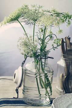 queen annes lace in a canning jar. Add food coloring and watch the flower change color.