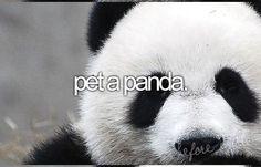I LOVE PANDAS!!!!!!!!!:DDDDDDDDDDDDDDDDDDDDDDDDDDDDDDDDDDDDDDDDDDDDDDDDDDD<3<3<3<3<3<3<3<3<3<3<3<3<3<3<3<3<3<3