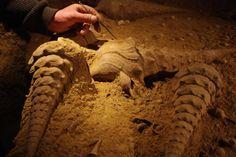 Giant prehistoric snail