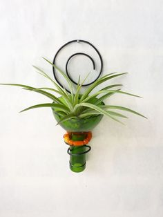 recycled bottle holding tillandsia.  Look up how to cut glass & use blue bottle!!
