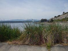 Washington State- Whidbey Island