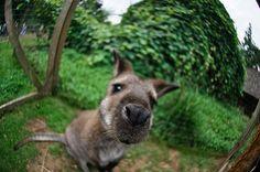 Wallaby that reminds me of Kangaroo Jack! Kangaroo Jack, Kangaroos, Zoo Animals, Adorable Animals, Polar Bear, Make Me Smile, Goodies, Bucket, Creatures