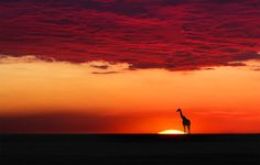 Pôr do Sol - Quênia - Moro