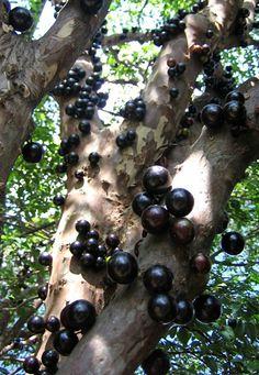 Compagnia del Giardinaggio: Frutti tropicali e subtropicali: esperienze in Sicilia