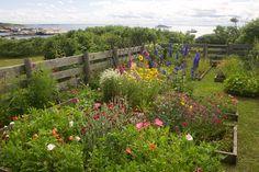 Gallery | Celia Thaxter's Island Garden