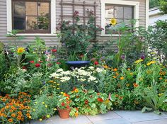 This is all done with edible and herbal plants. PLUS, these plants will attract pollinators (bees) & butterflies.