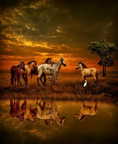 Raindrops and Roses Beautiful Horses, Animals Beautiful, Cute Animals, Pretty Horses, Horse Pictures, Animal Pictures, Especie Animal, Reflection Photos, Raindrops And Roses