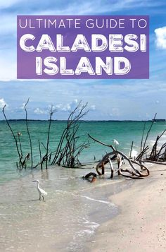 This is the ultimate guide to Caladesi Island! It contains everything you need to know + answers to all of your questions + information on how to walk to Caladesi Island State Park! Beach Photography Friends, Beach Photography Poses, Levitation Photography, Exposure Photography, Clearwater Beach Florida, Florida Beaches, Dunedin Florida, Lanai Island, Island Beach